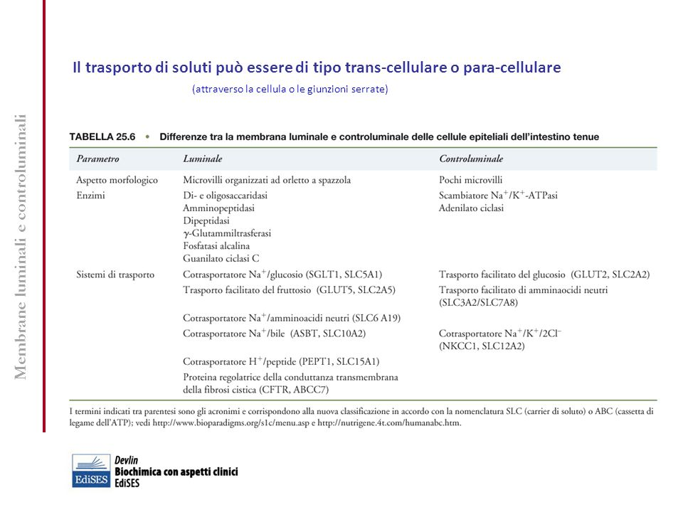 Peptidasi gastriche e pancreatiche