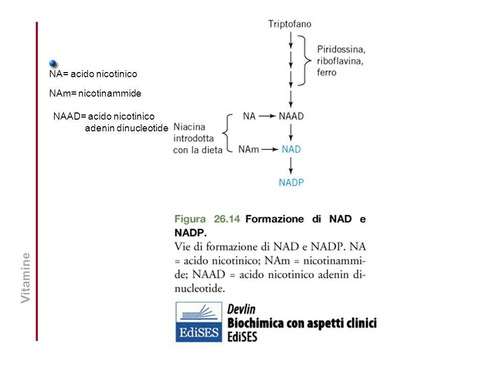 NA= acido nicotinico NAm= nicotinammide NAAD= acido nicotinico adenin dinucleotide