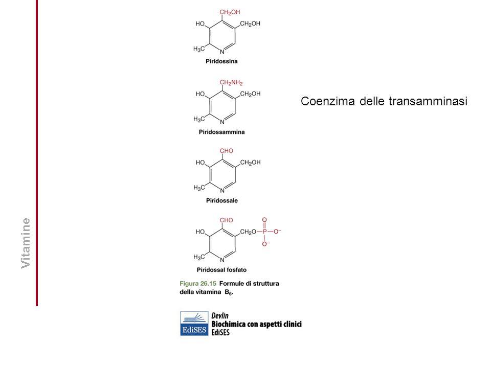 Vitamine Coenzima delle transamminasi