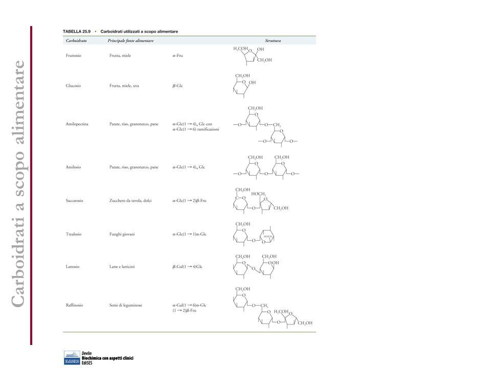 Nutrienti essenziali per la specie umana Nutrienti essenziali I cibi, inoltre, contengono molecole che non possono essere considerate nutrienti essenziali, ma che sono utili alla salute (fibra alimentare, fluoro).