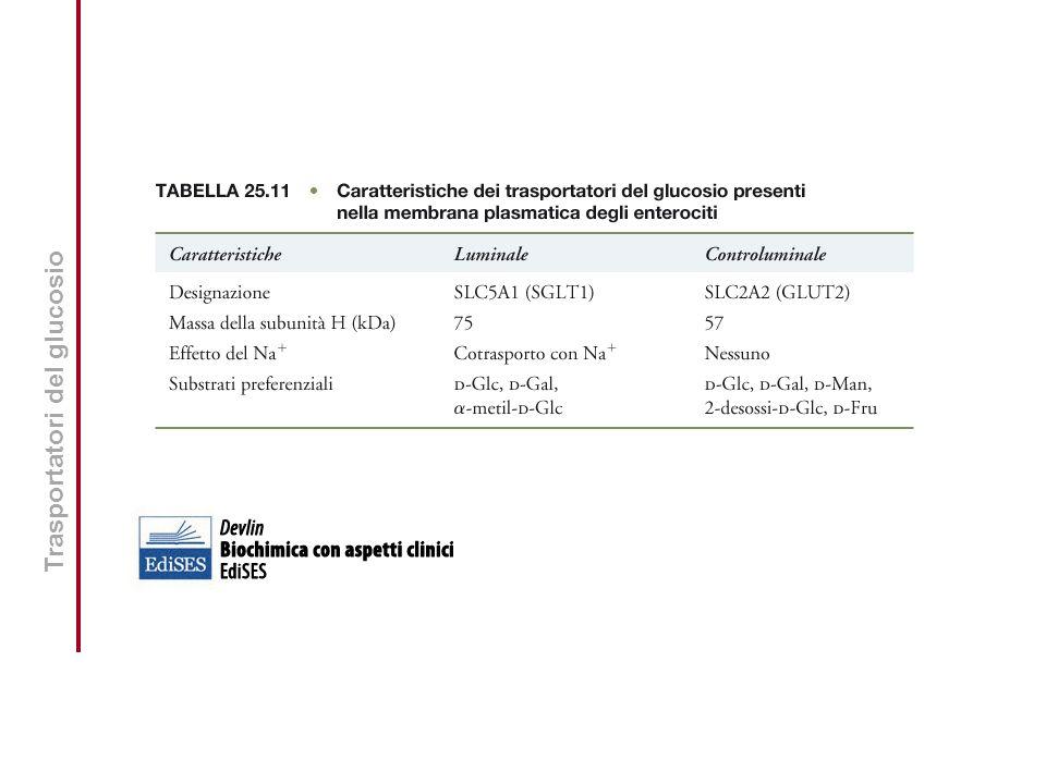 Vitamine Liposolubili Vitamina A: forme metabolicamente attive.