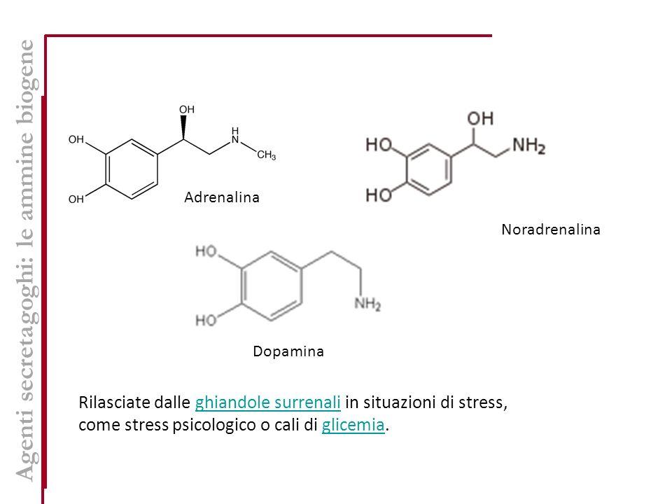 Adrenalina Noradrenalina Dopamina Rilasciate dalle ghiandole surrenali in situazioni di stress,ghiandole surrenali come stress psicologico o cali di glicemia.glicemia