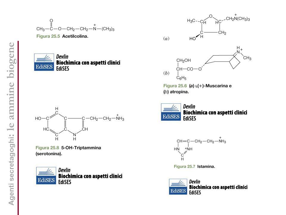 Agenti secretagoghi : le ammine biogene