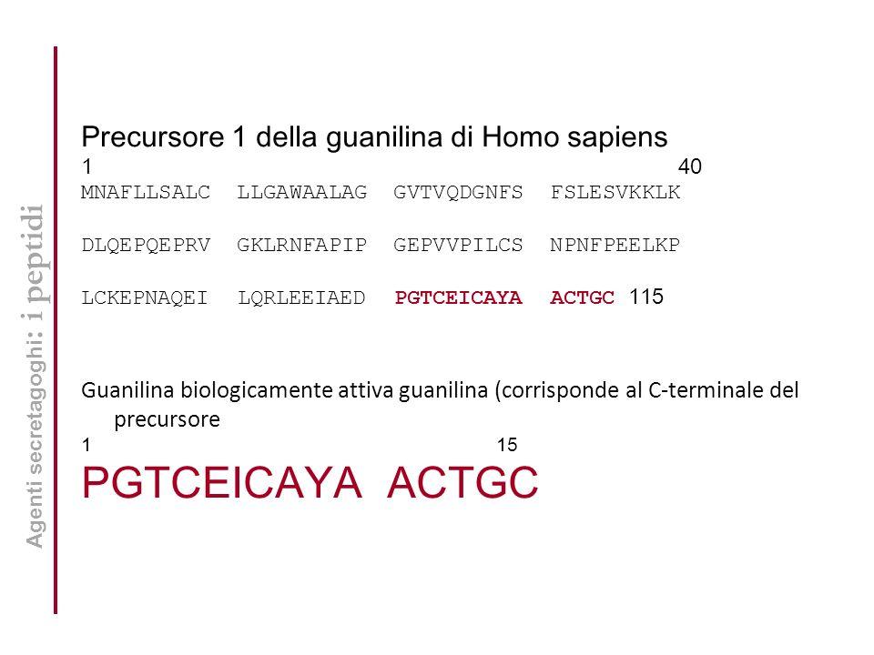 Precursore 1 della guanilina di Homo sapiens 1 40 MNAFLLSALC LLGAWAALAG GVTVQDGNFS FSLESVKKLK DLQEPQEPRV GKLRNFAPIP GEPVVPILCS NPNFPEELKP LCKEPNAQEI LQRLEEIAED PGTCEICAYA ACTGC 115 Guanilina biologicamente attiva guanilina (corrisponde al C-terminale del precursore 1 15 PGTCEICAYA ACTGC