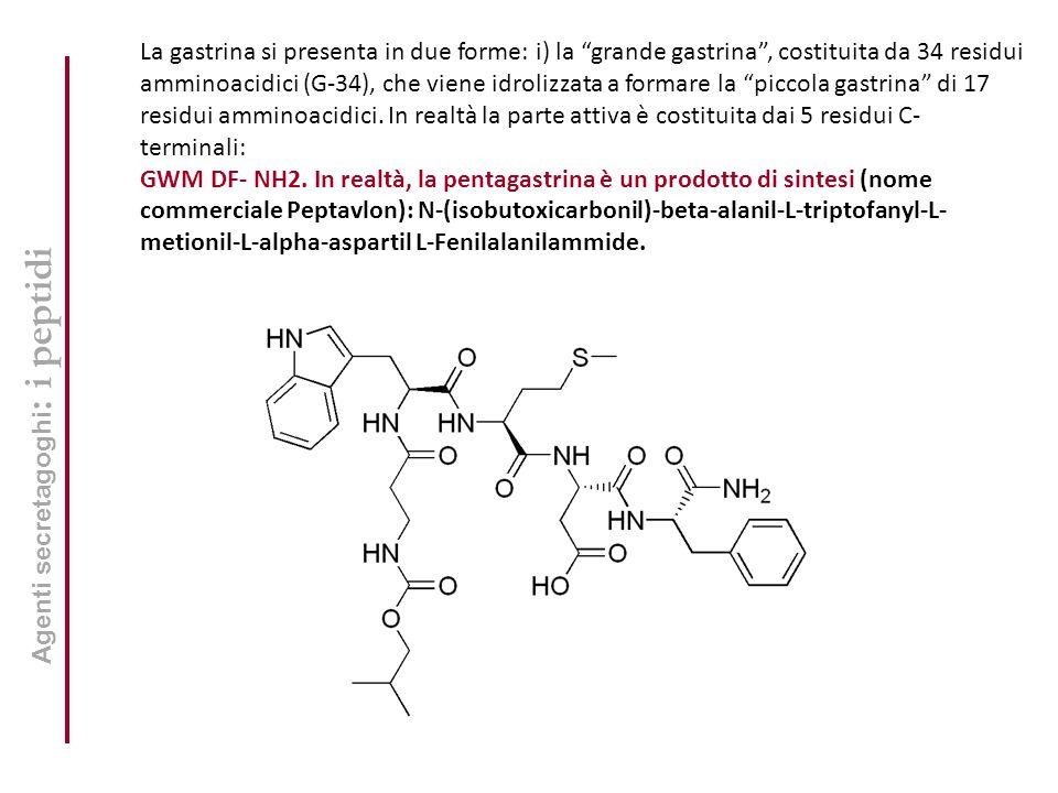 Agenti secretagoghi : i peptidi La gastrina si presenta in due forme: i) la grande gastrina, costituita da 34 residui amminoacidici (G-34), che viene idrolizzata a formare la piccola gastrina di 17 residui amminoacidici.