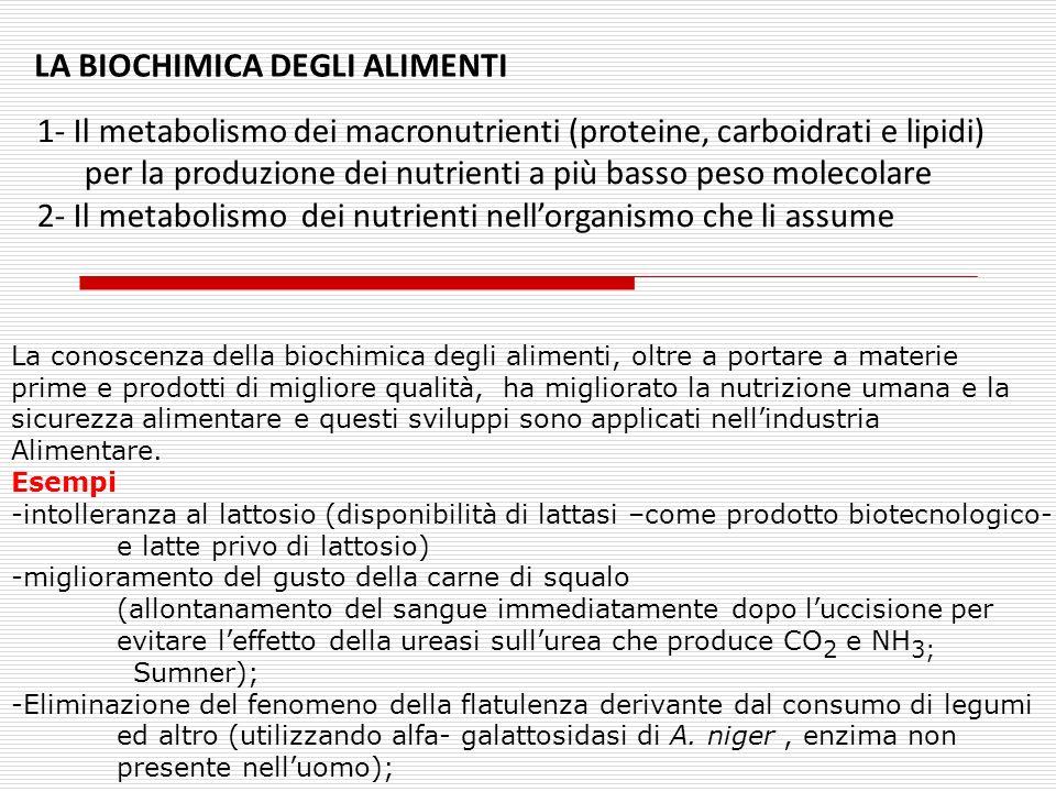 LA BIOCHIMICA DEGLI ALIMENTI 1- Il metabolismo dei macronutrienti (proteine, carboidrati e lipidi) per la produzione dei nutrienti a più basso peso mo