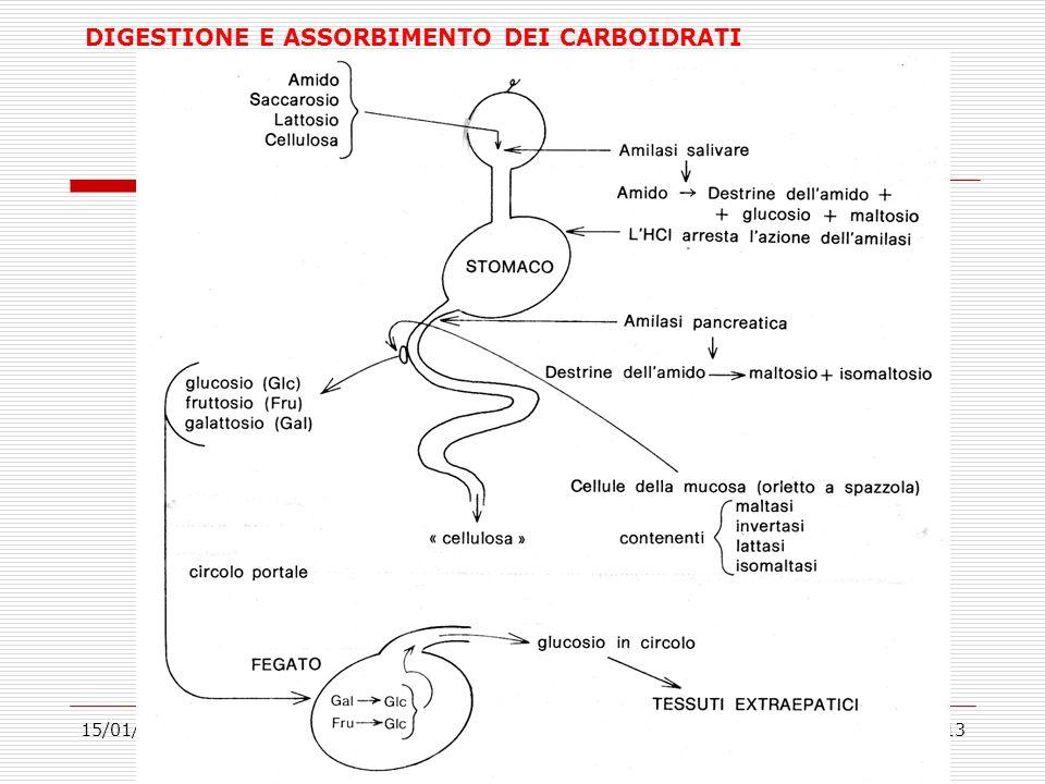 15/01/201413 DIGESTIONE E ASSORBIMENTO DEI CARBOIDRATI