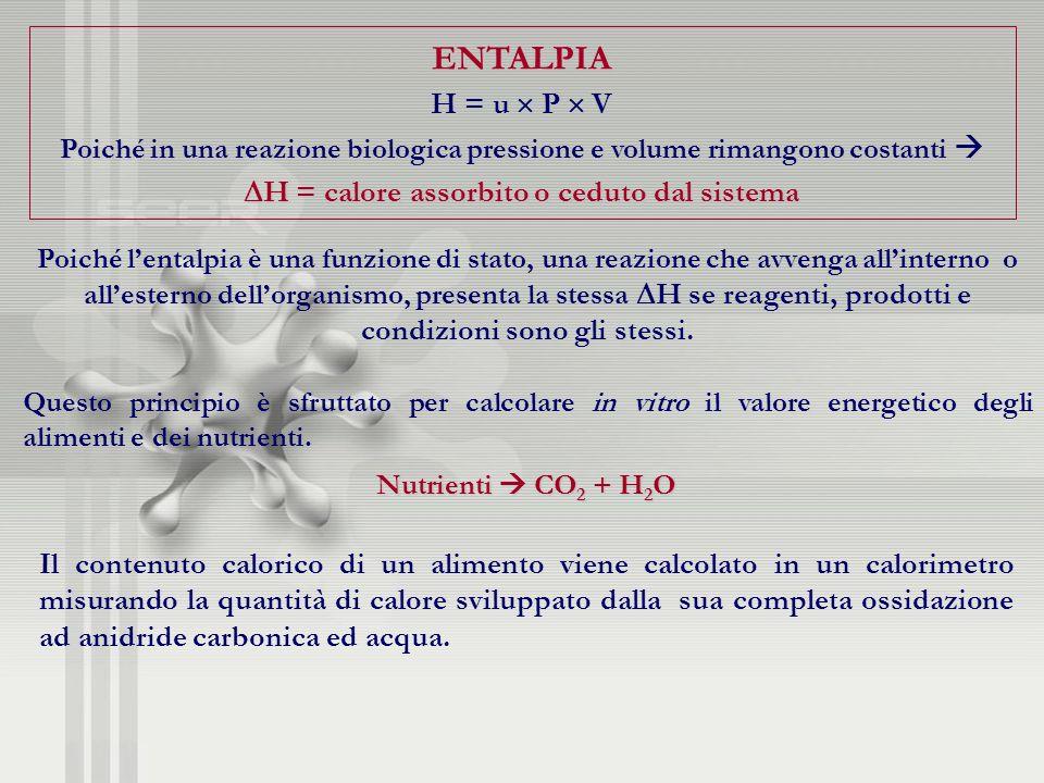 ENTALPIA H = u P V Poiché in una reazione biologica pressione e volume rimangono costanti Poiché in una reazione biologica pressione e volume rimangon