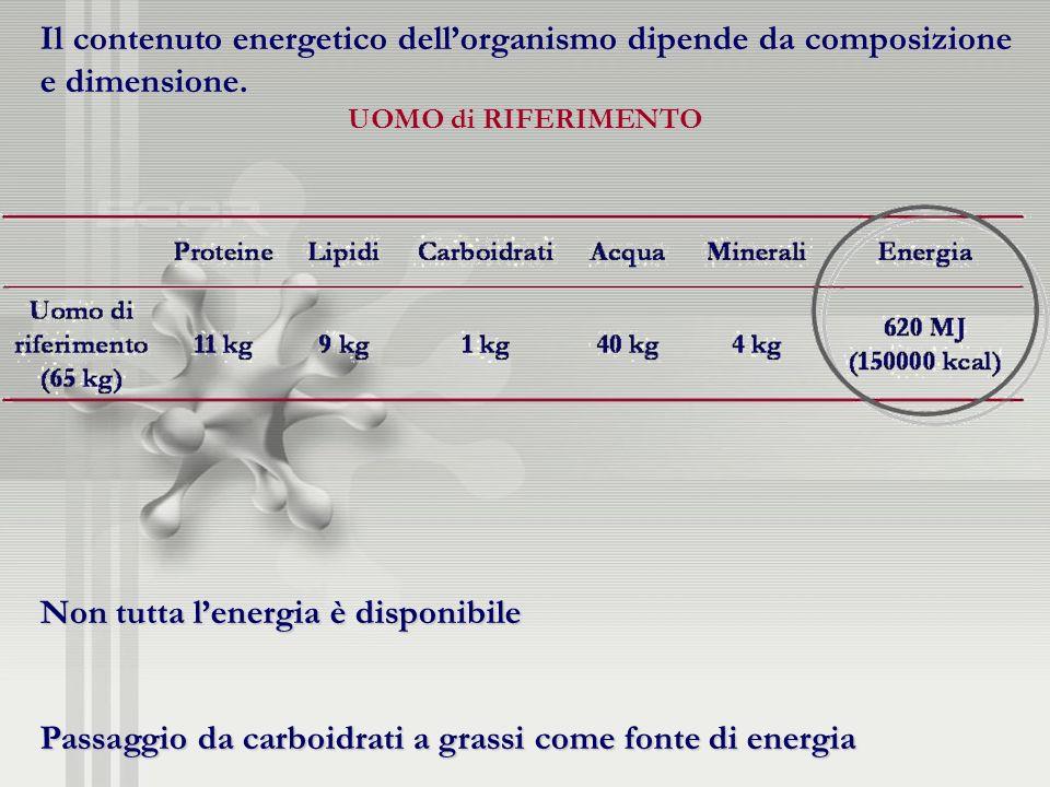 Il contenuto energetico dellorganismo dipende da composizione e dimensione. UOMO di RIFERIMENTO Non tutta lenergia è disponibile Passaggio da carboidr