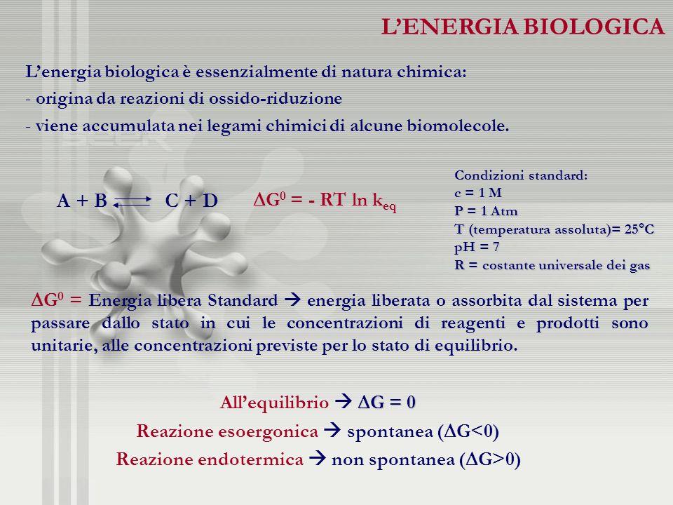 Lenergia biologica è essenzialmente di natura chimica: - origina da reazioni di ossido-riduzione - viene accumulata nei legami chimici di alcune biomo