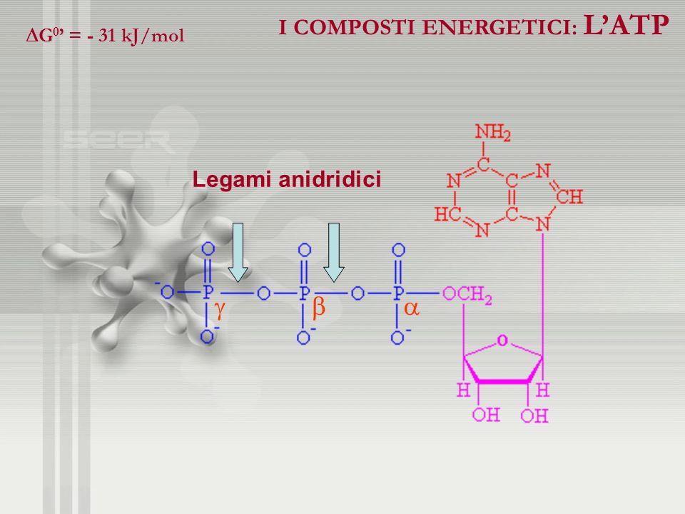 I COMPOSTI ENERGETICI: LATP G 0 = - 31 kJ/mol G 0 = - 31 kJ/mol Legami anidridici