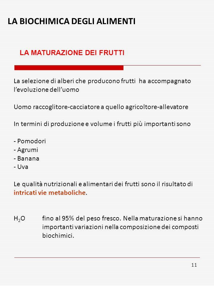 LA BIOCHIMICA DEGLI ALIMENTI LA MATURAZIONE DEI FRUTTI 11 La selezione di alberi che producono frutti ha accompagnato levoluzione delluomo Uomo raccoglitore-cacciatore a quello agricoltore-allevatore In termini di produzione e volume i frutti più importanti sono - Pomodori - Agrumi - Banana - Uva Le qualità nutrizionali e alimentari dei frutti sono il risultato di intricati vie metaboliche.