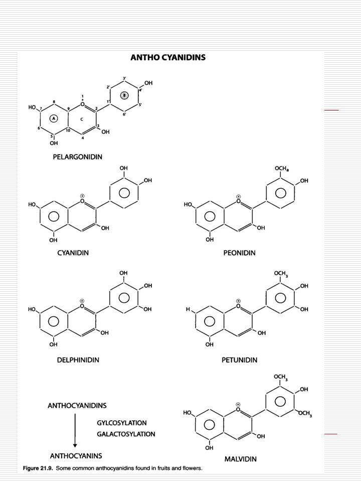 Le biotecnologie nella produzione di alimenti, trattamento e processing - enzimi alimentari derivati dalle biotecnologie; - organismi geneticamente modificati utili per il processing degli alimenti