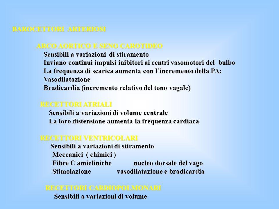 BAROCETTORI ARTERIOSI ARCO AORTICO E SENO CAROTIDEO ARCO AORTICO E SENO CAROTIDEO Sensibili a variazioni di stiramento Sensibili a variazioni di stira