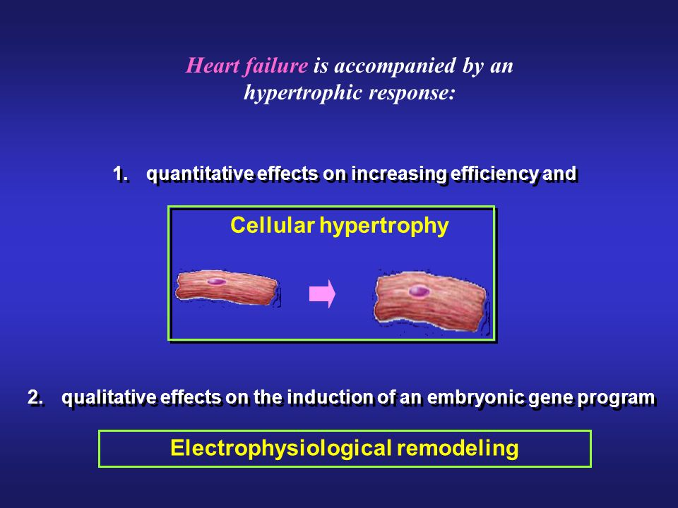 Electrophysiological remodeling Cellular hypertrophy Heart failure is accompanied by an hypertrophic response: 1.quantitative effects on increasing efficiency and 2.qualitative effects on the induction of an embryonic gene program