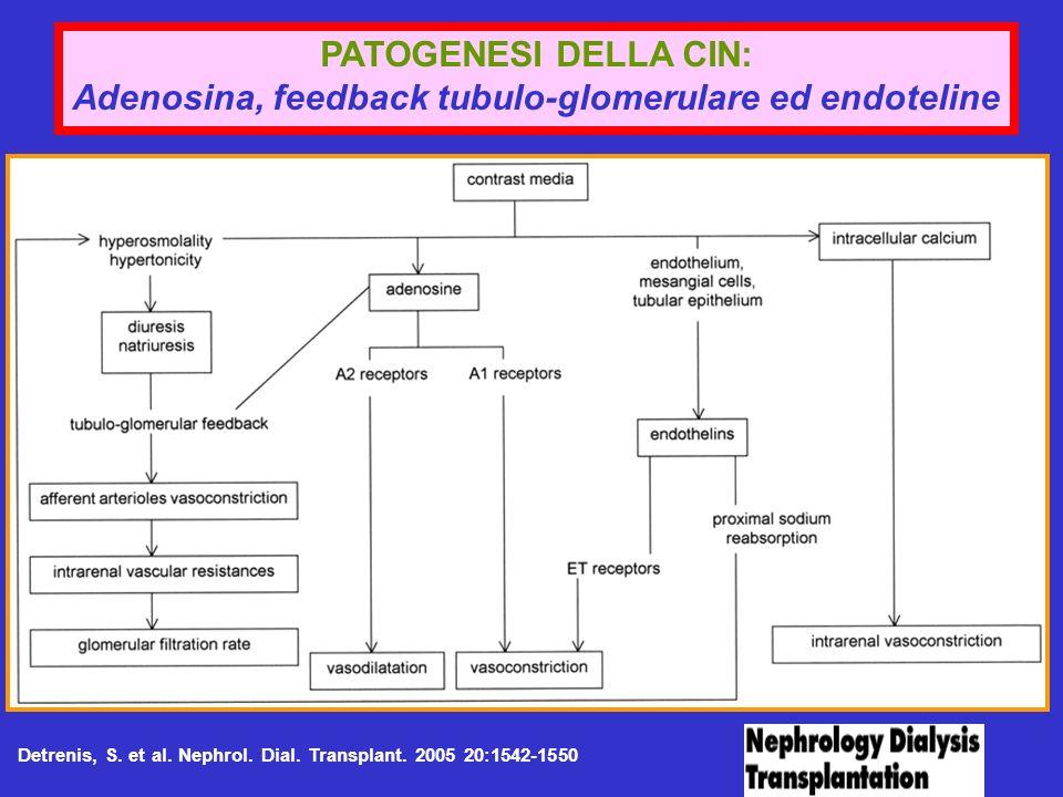 Detrenis, S. et al. Nephrol. Dial. Transplant. 2005 20:1542-1550 PATOGENESI DELLA CIN: Adenosina, feedback tubulo-glomerulare ed endoteline