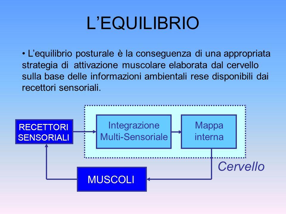 LEQUILIBRIO (2) MUSCOLI Cervello Il cervello sfrutta le informazioni visiva, vestibolare e somatosensoriale per mantenere lequilibrio VISIVA VESTIBOLARE SOMATOS.