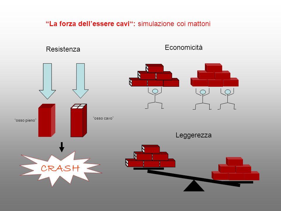 Resistenza Leggerezza CRASH osso cavo osso pieno Economicità La forza dellessere cavi: simulazione coi mattoni