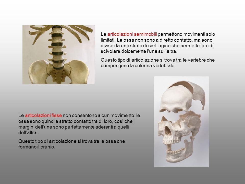 Le articolazioni semimobili permettono movimenti solo limitati. Le ossa non sono a diretto contatto, ma sono divise da uno strato di cartilagine che p