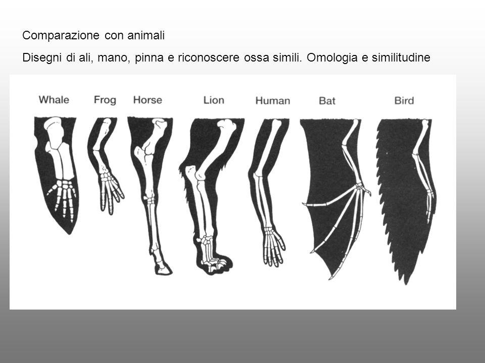 Comparazione con animali Disegni di ali, mano, pinna e riconoscere ossa simili. Omologia e similitudine
