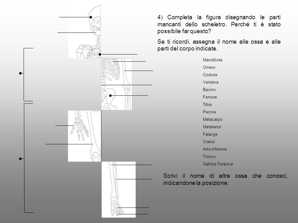 4) Completa la figura disegnando le parti mancanti dello scheletro. Perché ti è stato possibile far questo? Se ti ricordi, assegna il nome alle ossa e