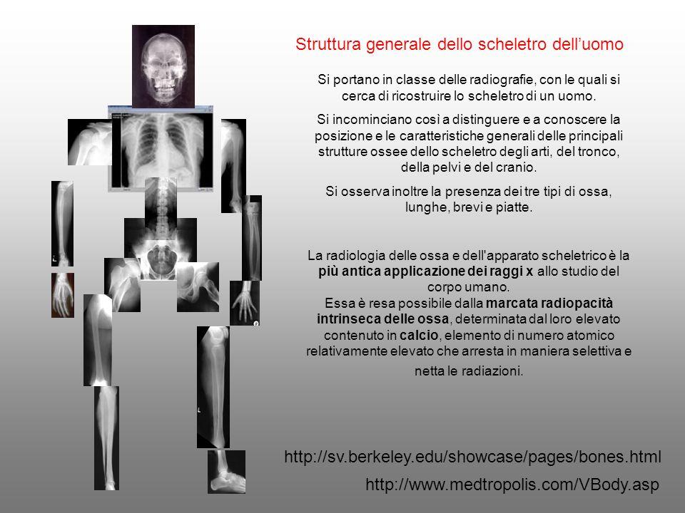 Struttura generale dello scheletro delluomo Si portano in classe delle radiografie, con le quali si cerca di ricostruire lo scheletro di un uomo. Si i