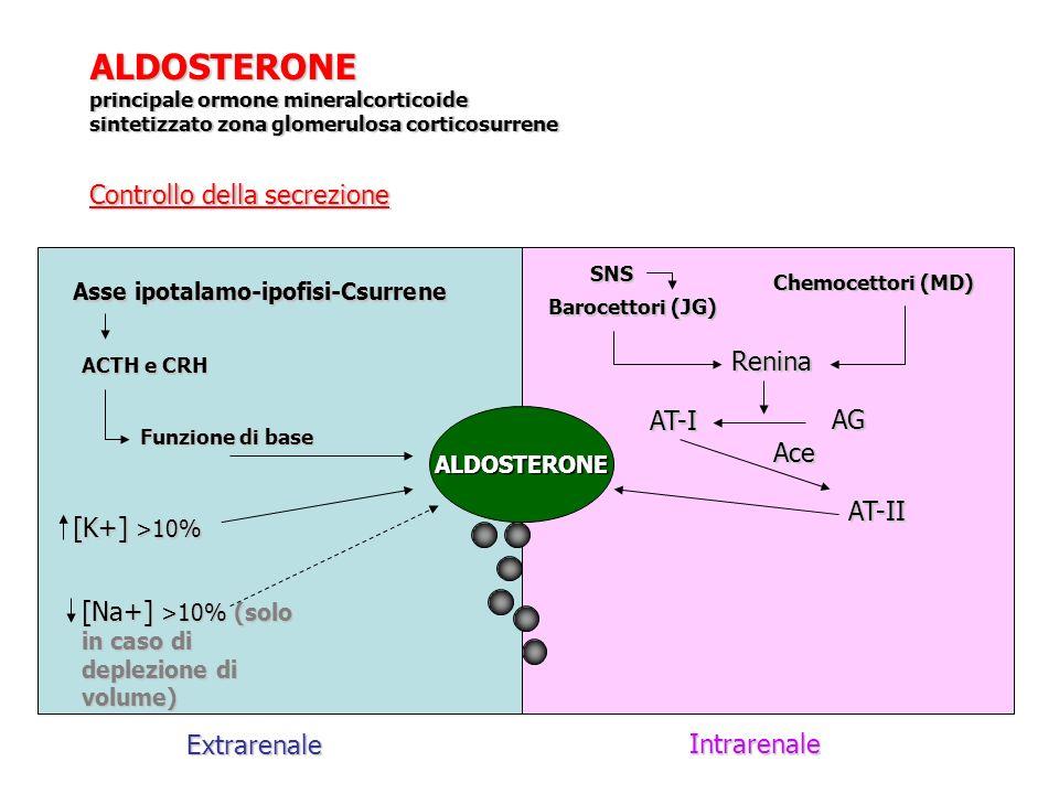 ALDOSTERONE principale ormone mineralcorticoide sintetizzato zona glomerulosa corticosurrene Controllo della secrezione Extrarenale Intrarenale ALDOST