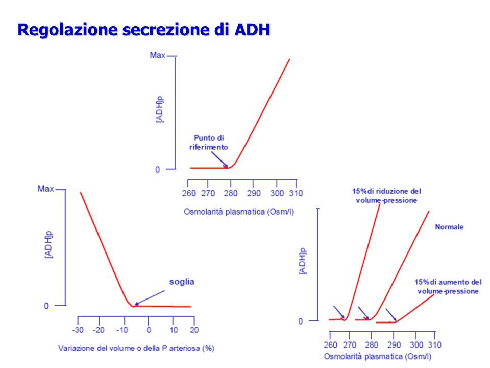 Regolazione secrezione di ADH