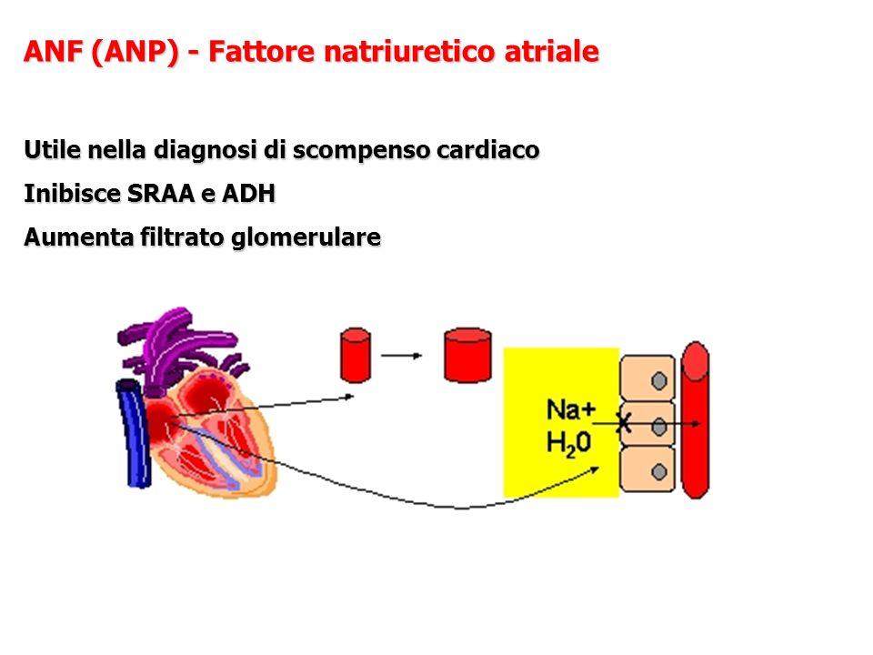 ANF (ANP) - Fattore natriuretico atriale Utile nella diagnosi di scompenso cardiaco Inibisce SRAA e ADH Aumenta filtrato glomerulare