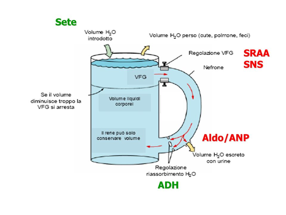 SRAASNS ADH Sete Aldo/ANP