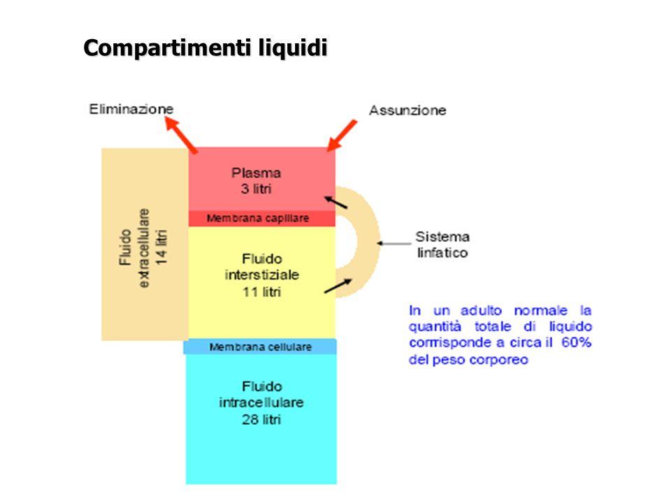 Elevati livelli di ADH Volume deplezione Nausea Dolore Diretto stimolo chirurgico Riassorbimento renale di H2O Aumento riassorbimento tubulare di H2O per - volume deplezione preesistente - perdita di sangue durante intervento - ipotensione Introduzione eccessiva di H2O Reidratanti ipotoniche Fluidi di irrigazione Farmaci Diuretici tiazidici Antiemetici Narcotici Fattori che alterano il bilancio idrosalino nei pazienti sottoposti a interventi chirurgici