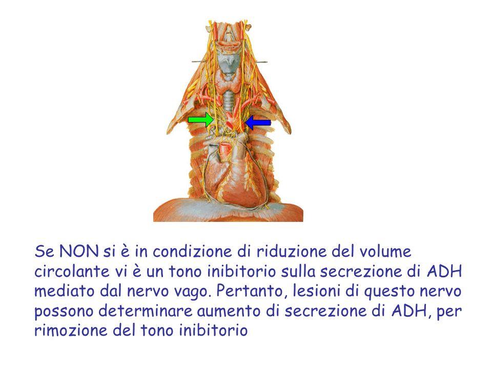 Se NON si è in condizione di riduzione del volume circolante vi è un tono inibitorio sulla secrezione di ADH mediato dal nervo vago. Pertanto, lesioni