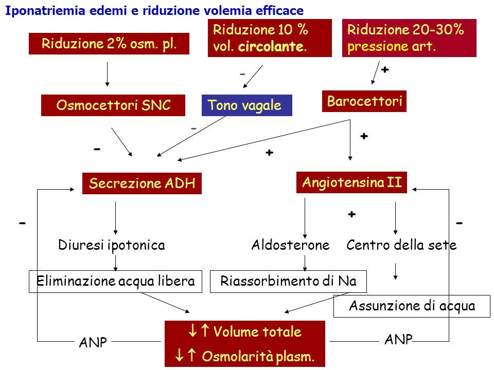 Riduzione 2% osm. pl. Osmocettori SNC Secrezione ADH Diuresi ipotonica Eliminazione acqua libera Riduzione 10 % vol. circolante. Barocettori + Angiote