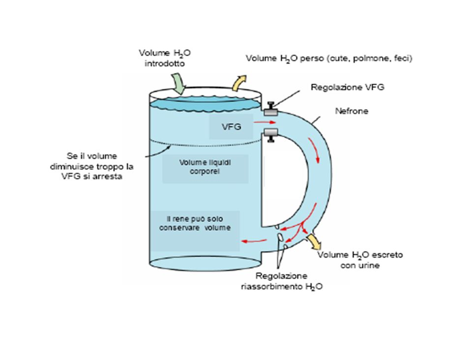 Molto importante PREVENIRE evitando infusione di liquidi ipotonici Misurare osmolarità plasmatica per confermare ipoosmoticità Se SINTOMI e/o ACUTA (intento correggere <1-2 mEq/h) - Iniziare infusione di soluzioni ipertoniche (2-3 volte saline) - Usare una pompa infusionale - Monitorare condizioni del paziente e natriemia ogni 2 ore - Rallentare correzione quando raggiunti 126-130 mEq/L - Interrompere ipertonica quando scomparsi sintomi correzione più rapida di 20-24 mEq in 48 ore corretti 20-25 mEq - Evitare iper/normonatriemia nei primi 5 giorni di terapia Se ASINTOMATICA e/o CRONICA (intento correggere <0,5 mEq/h) - Restrizione idrica - Terapia disordini sottostanti - Ipertonica solo se Na <115- 118 mEq/L Trattamento Iponatriemia