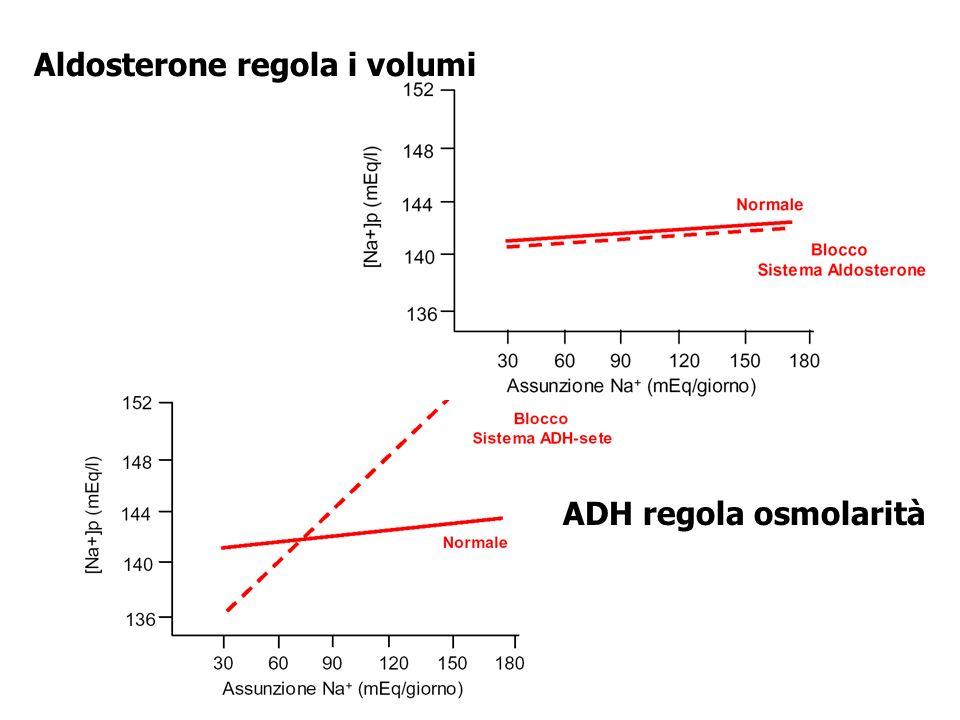 Aldosterone regola i volumi ADH regola osmolarità