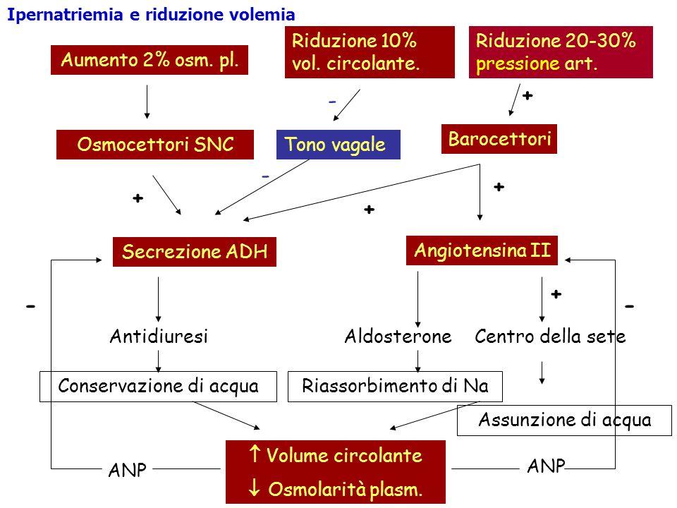 Aumento 2% osm. pl. Osmocettori SNC + Secrezione ADH Antidiuresi Conservazione di acqua Riduzione 10% vol. circolante. Barocettori + Angiotensina II +
