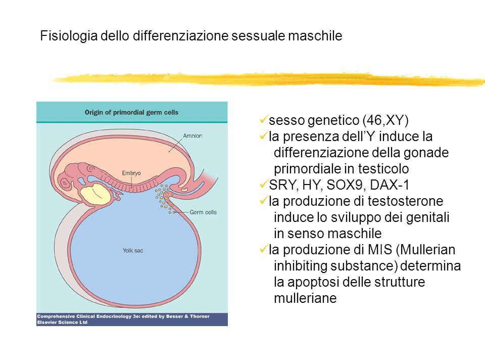 Fisiologia dello differenziazione sessuale maschile sesso genetico (46,XY) la presenza dellY induce la differenziazione della gonade primordiale in te