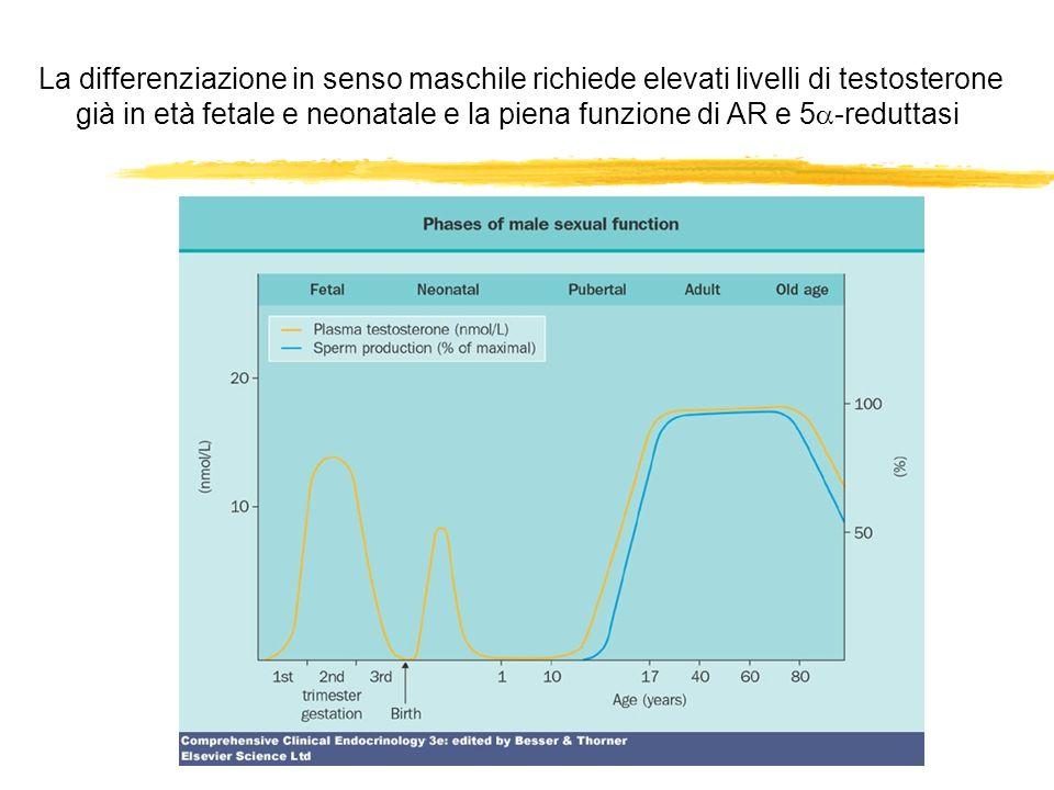 La differenziazione in senso maschile richiede elevati livelli di testosterone già in età fetale e neonatale e la piena funzione di AR e 5 -reduttasi