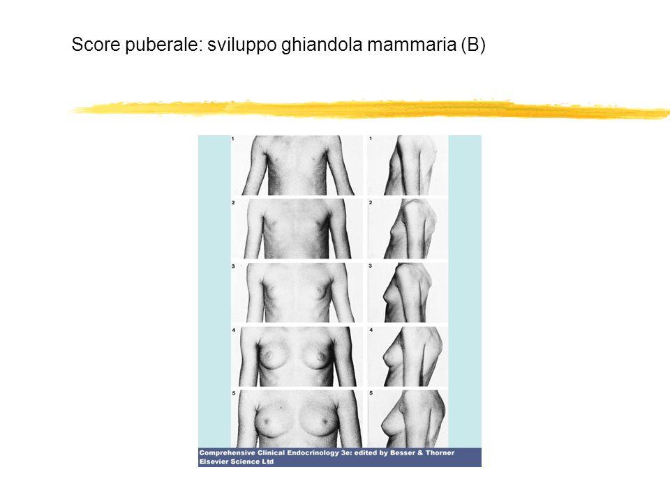 Score puberale: sviluppo ghiandola mammaria (B)