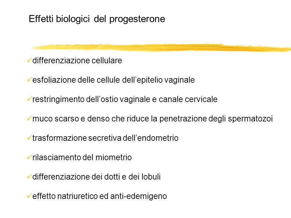 Effetti biologici del progesterone differenziazione cellulare esfoliazione delle cellule dellepitelio vaginale restringimento dellostio vaginale e can