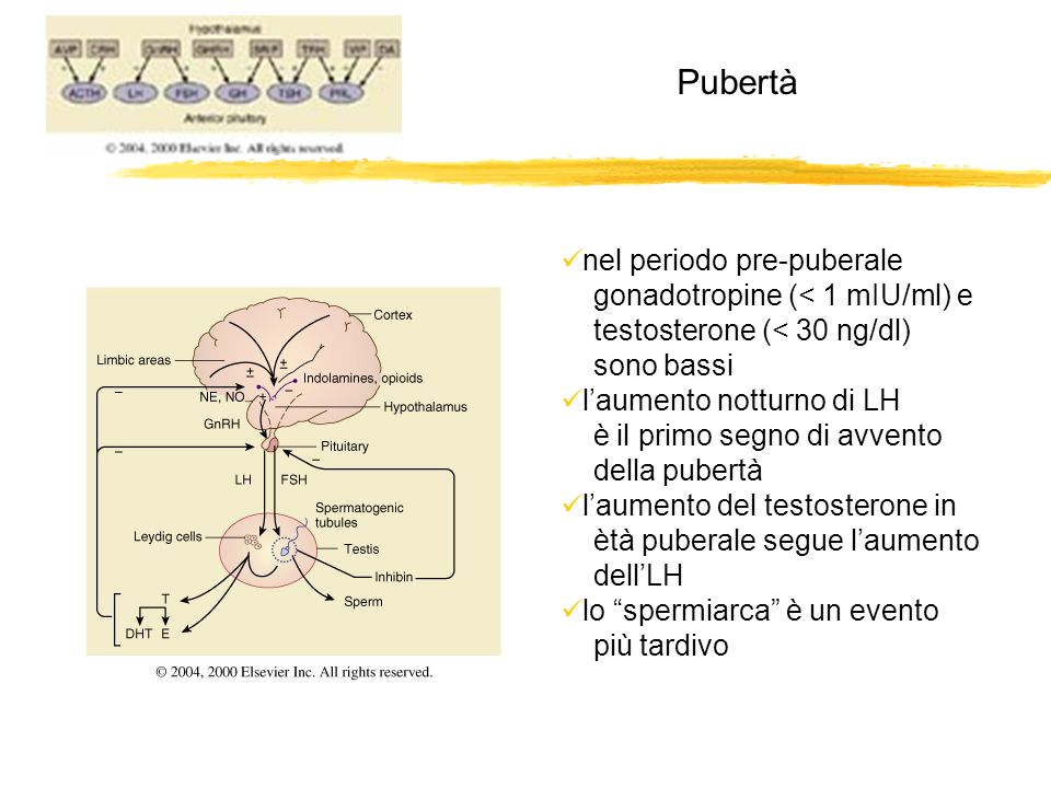 Pubertà nel periodo pre-puberale gonadotropine (< 1 mIU/ml) e testosterone (< 30 ng/dl) sono bassi laumento notturno di LH è il primo segno di avvento