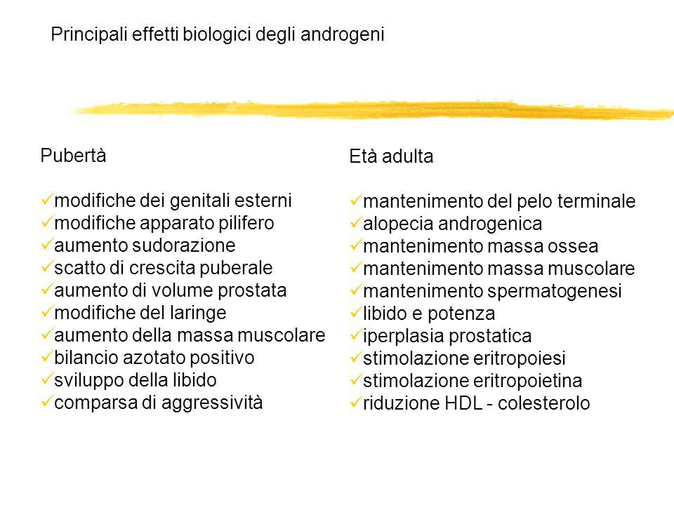 Principali effetti biologici degli androgeni Pubertà modifiche dei genitali esterni modifiche apparato pilifero aumento sudorazione scatto di crescita