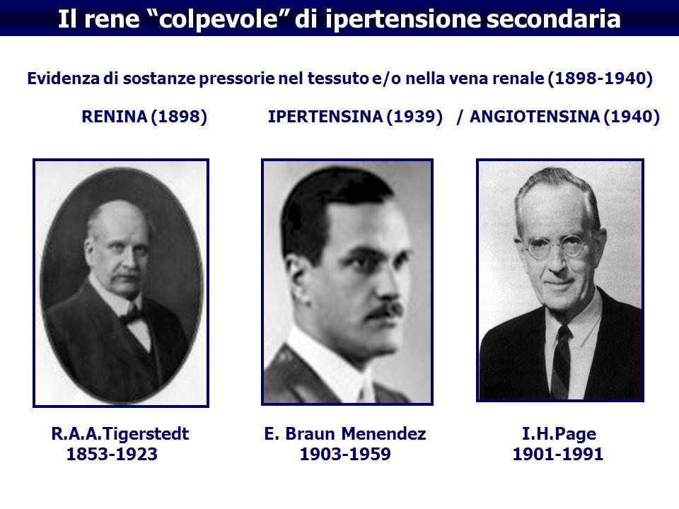 Il rene colpevole di ipertensione secondaria Evidenza di sostanze pressorie nel tessuto e/o nella vena renale (1898-1940) RENINA (1898) IPERTENSINA (1