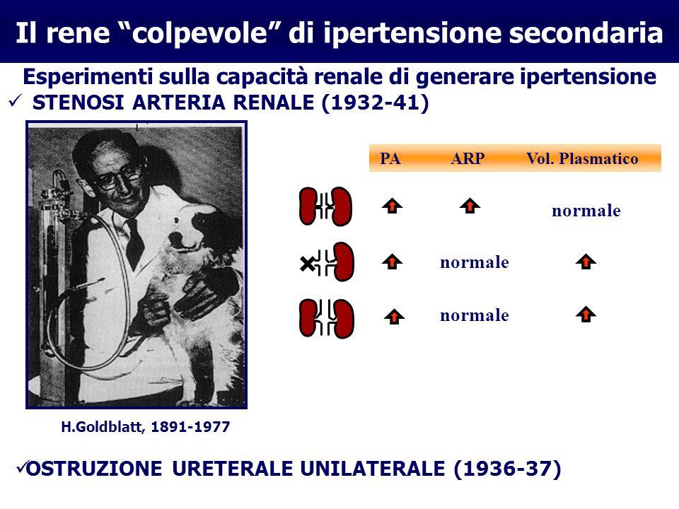 Il rene colpevole di ipertensione secondaria Esperimenti sulla capacità renale di generare ipertensione STENOSI ARTERIA RENALE (1932-41) PA ARP Vol. P