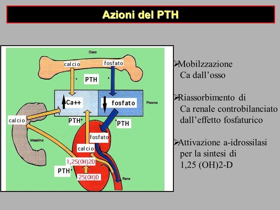 Azioni del PTH Mobilzzazione Ca dallosso Riassorbimento di Ca renale controbilanciato dalleffetto fosfaturico Attivazione a-idrossilasi per la sintesi