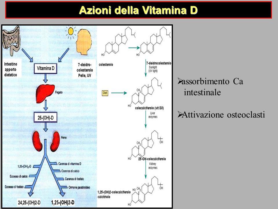 Azioni della Vitamina D assorbimento Ca intestinale Attivazione osteoclasti