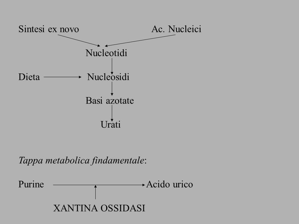 Sintesi ex novo Ac. Nucleici Nucleotidi Dieta Nucleosidi Basi azotate Urati Tappa metabolica findamentale: Purine Acido urico XANTINA OSSIDASI