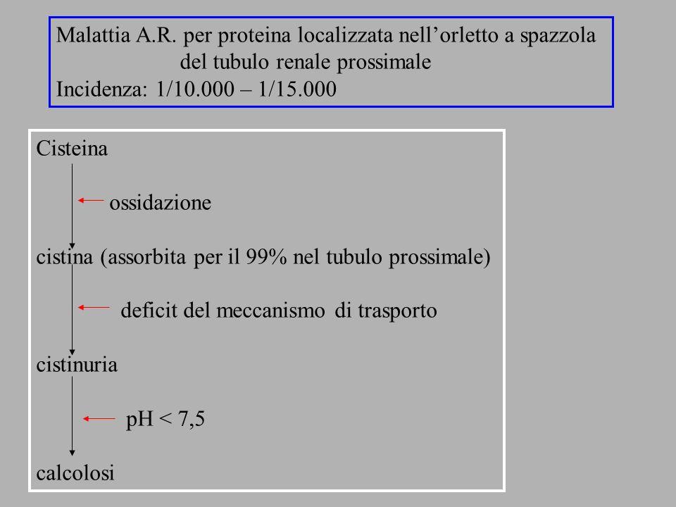 Cisteina ossidazione cistina (assorbita per il 99% nel tubulo prossimale) deficit del meccanismo di trasporto cistinuria pH < 7,5 calcolosi Malattia A