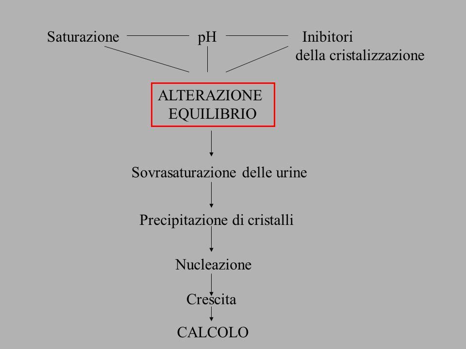 Saturazione pH Inibitori della cristalizzazione Sovrasaturazione delle urine Precipitazione di cristalli Nucleazione Crescita CALCOLO ALTERAZIONE EQUI