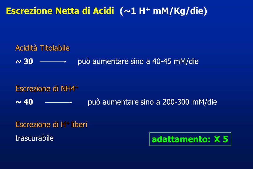 Escrezione Netta di Acidi (~1 H + mM/Kg/die) Acidità Titolabile ~ 30 può aumentare sino a 40-45 mM/die Escrezione di NH4 + ~ 40 può aumentare sino a 2